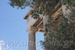 Olivenbaum im Pandroseion